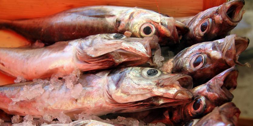 ballaro pesci