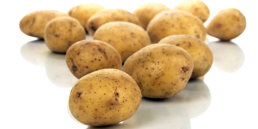 OGM: UE DECRETA L'AUTORIZZAZIONE A COLTIVAZIONE DI ALCUNE COLTURE GENTICAMENTE MODIFICATE