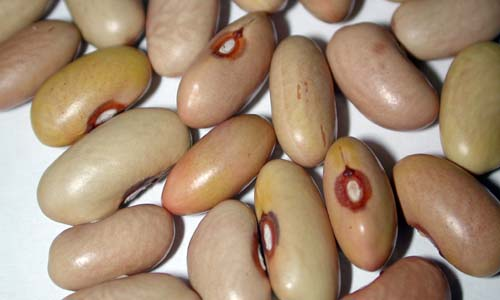 fagiolo-giallorino